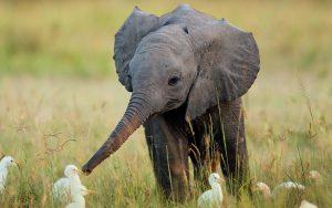 23-02-17-baby-elephant13537