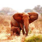 23-02-17-elephant-baby-elephant15714