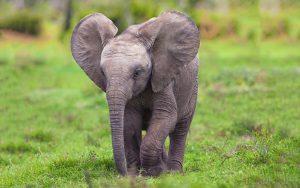 23-02-17-elephant-baby10607