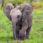 23-02-17-elephant-baby17844