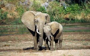 23-02-17-elephant-mother-baby10680