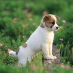 24-02-17-beautiful-dogs-wallpapers11