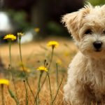 24-02-17-beautiful-dogs-wallpapers25