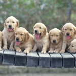 24-02-17-beautiful-dogs-wallpapers32