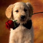 24-02-17-beautiful-dogs-wallpapers7