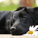 24-02-17-beautiful-dogs-wallpapers9