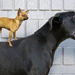 24-02-17-big-dogs7463