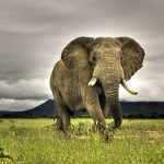 24-02-17-elephant-wallpapers492