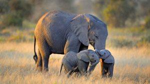 24-02-17-elephant-wallpapers498