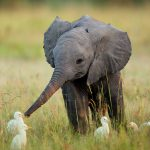 24-02-17-elephant-wallpapers499