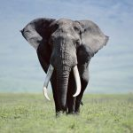 24-02-17-elephant-wallpapers501