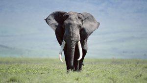 24-02-17-elephant-wallpapers501