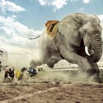 24-02-17-elephant-wallpapers504