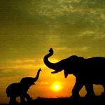 24-02-17-elephant-wallpapers505