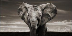 24-02-17-elephant-wallpapers507