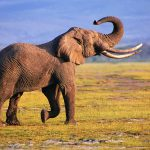 24-02-17-elephant-wallpapers508