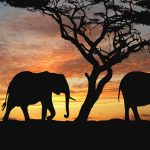 24-02-17-elephant-wallpapers518