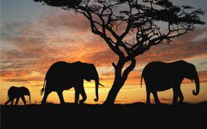 24-02-17-elephant-wallpapers518