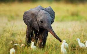 24-02-17-elephant-wallpapers522