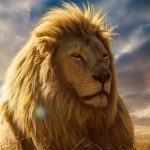 24-02-17-lion-wallpapers-623