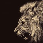 24-02-17-lion-wallpapers-625