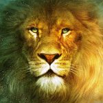 24-02-17-lion-wallpapers-633