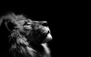 24-02-17-lion-wallpapers-634