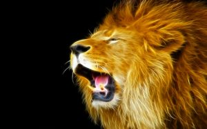 24-02-17-lion-wallpapers-637