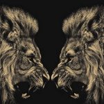 24-02-17-lion-wallpapers-642