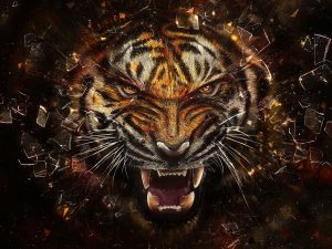 24-02-17-tiger-wallpapers951