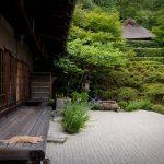 26-02-17-asian-garden-cat14332