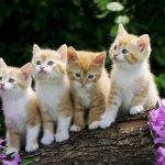 26-02-17-beautiful-cats18507