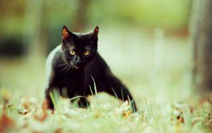 26-02-17-black-cat-wallpaper10055