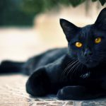 26-02-17-black-cat-wallpaper12057