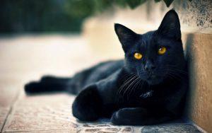 26-02-17-black-cat-wallpaper12057