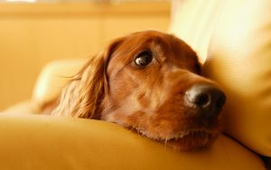 26-02-17-calm-dog12912