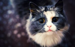 26-02-17-cat-face-wallpaper12569