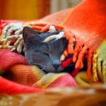 26-02-17-cat-sleep-blanket11638