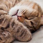 26-02-17-cat-sleep15105