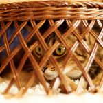 26-02-17-cute-cat-basket13724