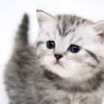 26-02-17-cute-cat-face13500