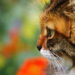 26-02-17-cute-cat-face15899