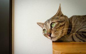 26-02-17-cute-cat16659