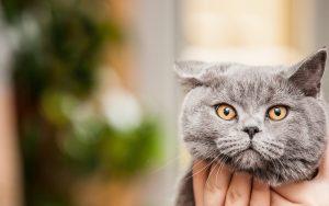 26-02-17-cute-grey-cat12583