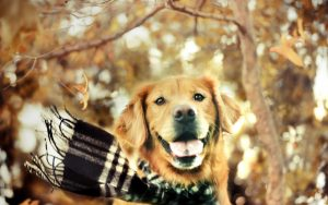 26-02-17-dog-scarf-autumn-nature18473