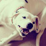 26-02-17-dog-white15038