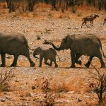 26-02-17-elephant-family-hd11427