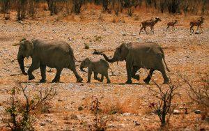 26-02-17-elephant-family-hd11427