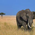 26-02-17-elephant12803