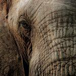 26-02-17-elephant16199